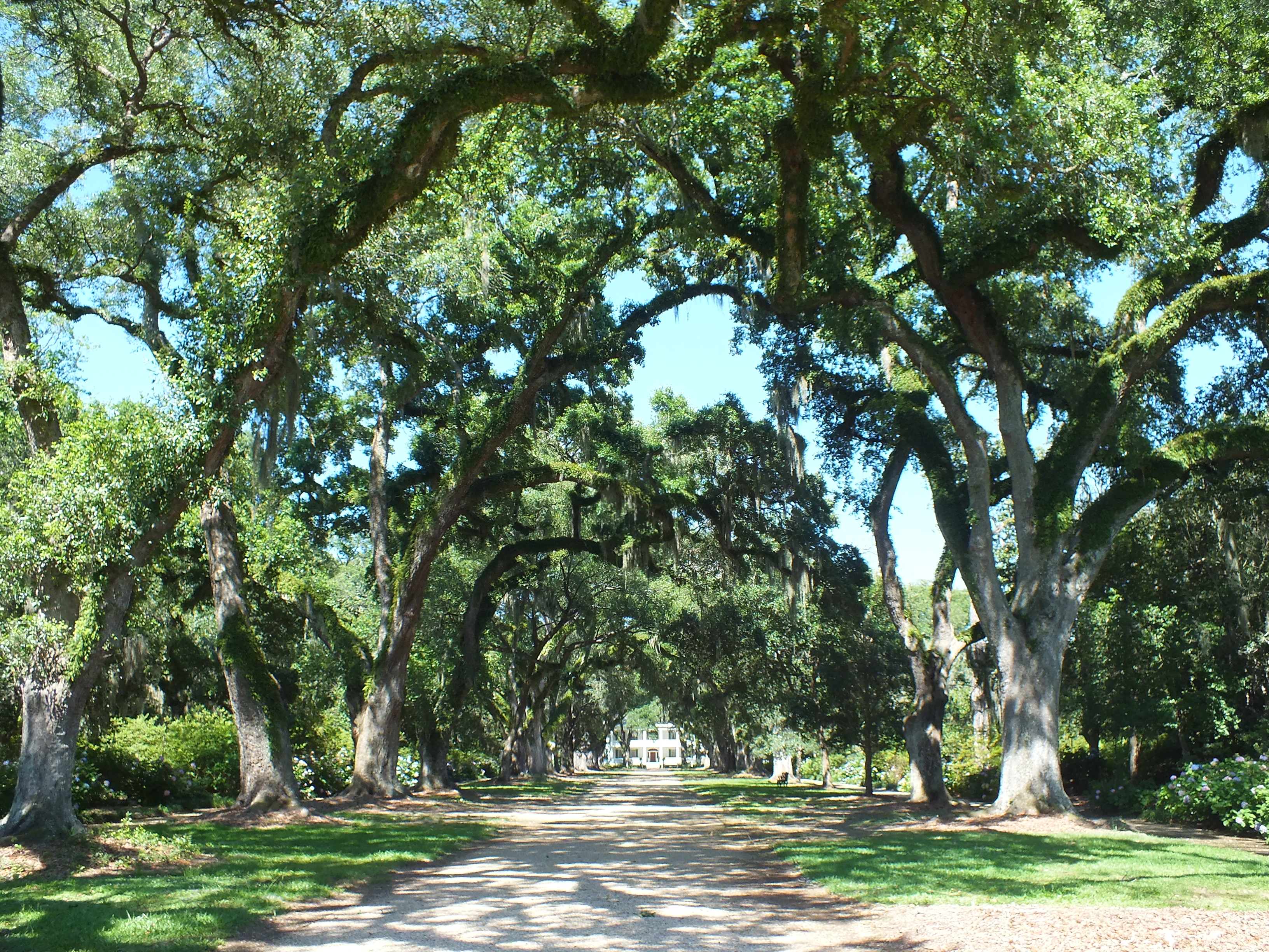 saint francisville Bed and breakfast lodging in historic st francisville, la.