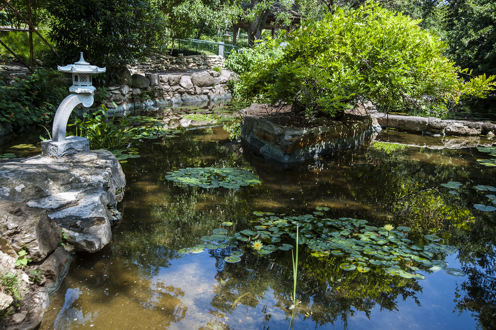 Taniguchi s gift to the city of austin u s japanese gardens for Japanese pond