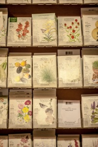a small section of the seed shelves where I did my shopping (photo by Bill Eger)