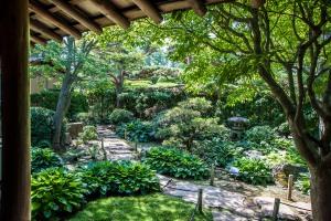 intimate moss garden