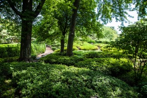 a cool woodland