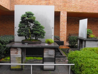 one example of the bonsai collection