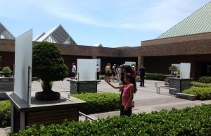 bonsai courtyard on a sunny day