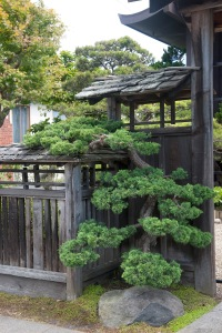 evergreen by front gate