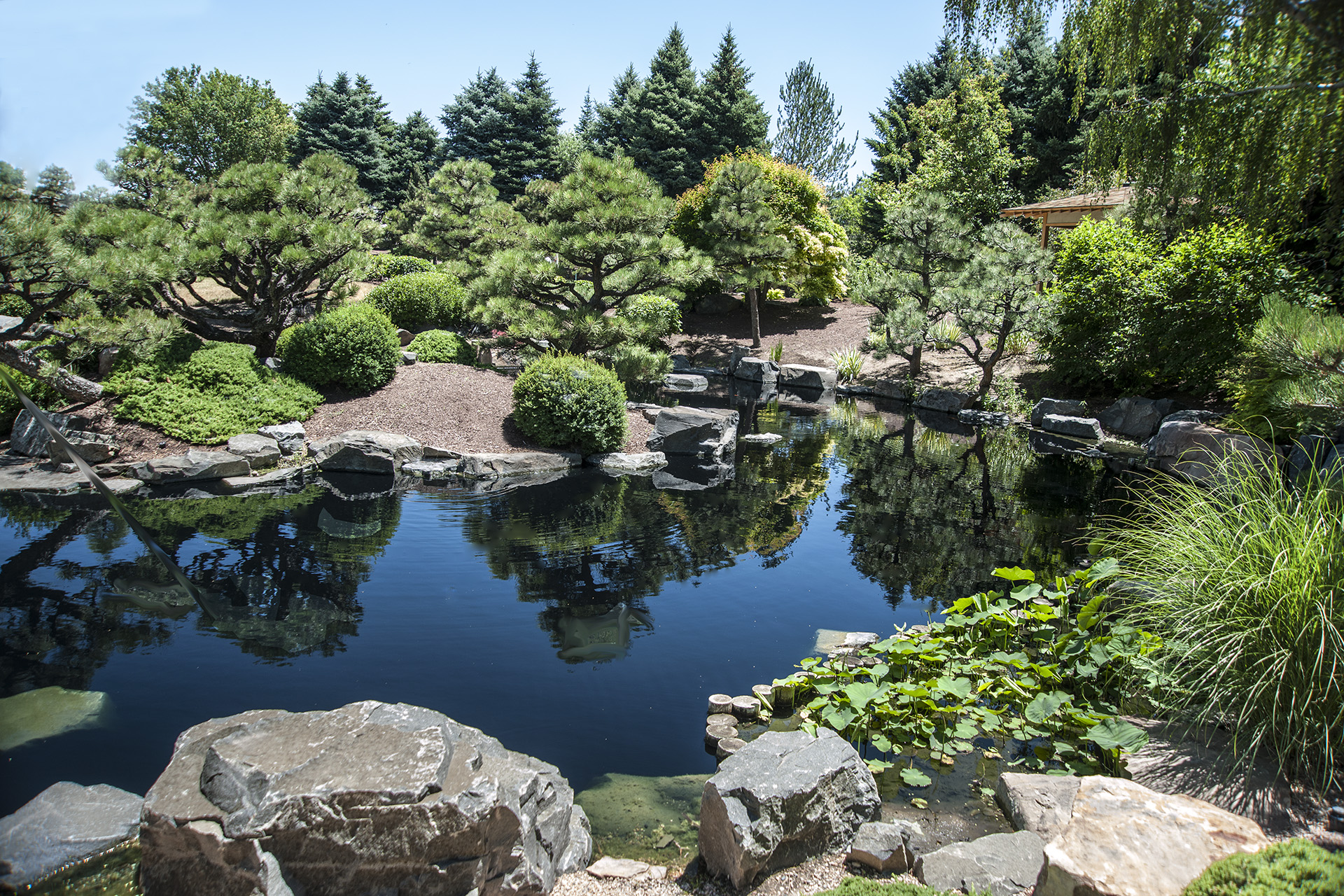 Sho fu en the garden of the pine and wind in denver for Large pond plants