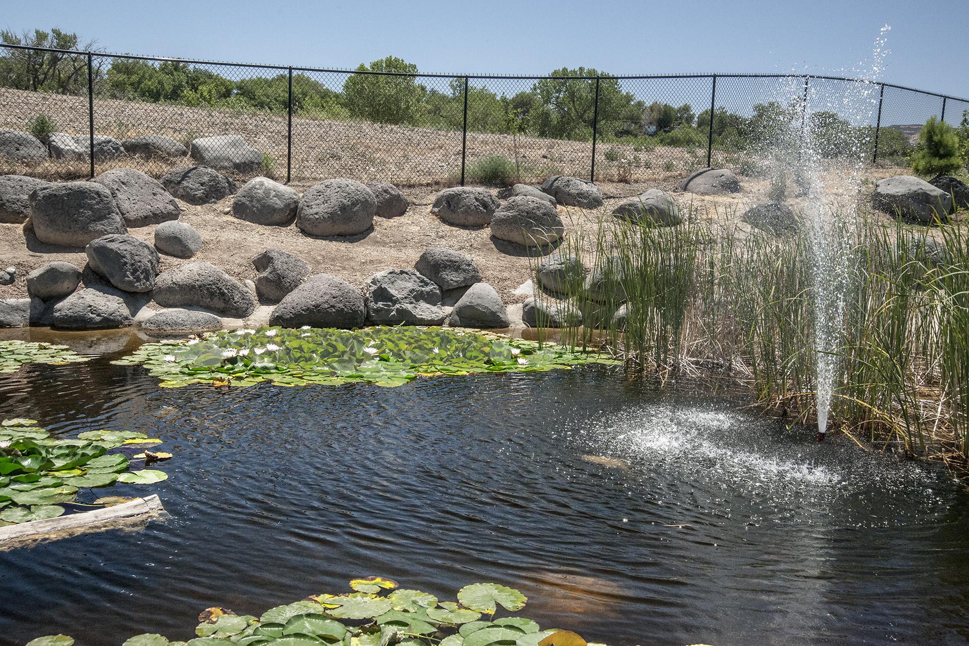 Grand Junction Garden A Work In Progress U S Japanese Gardens