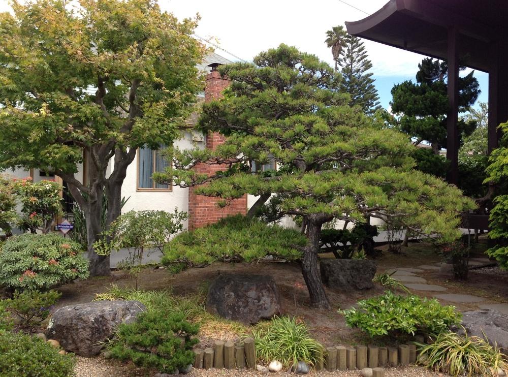 Berkeley Higashi Honganji Buddhist Temple garden evolved (5/6)