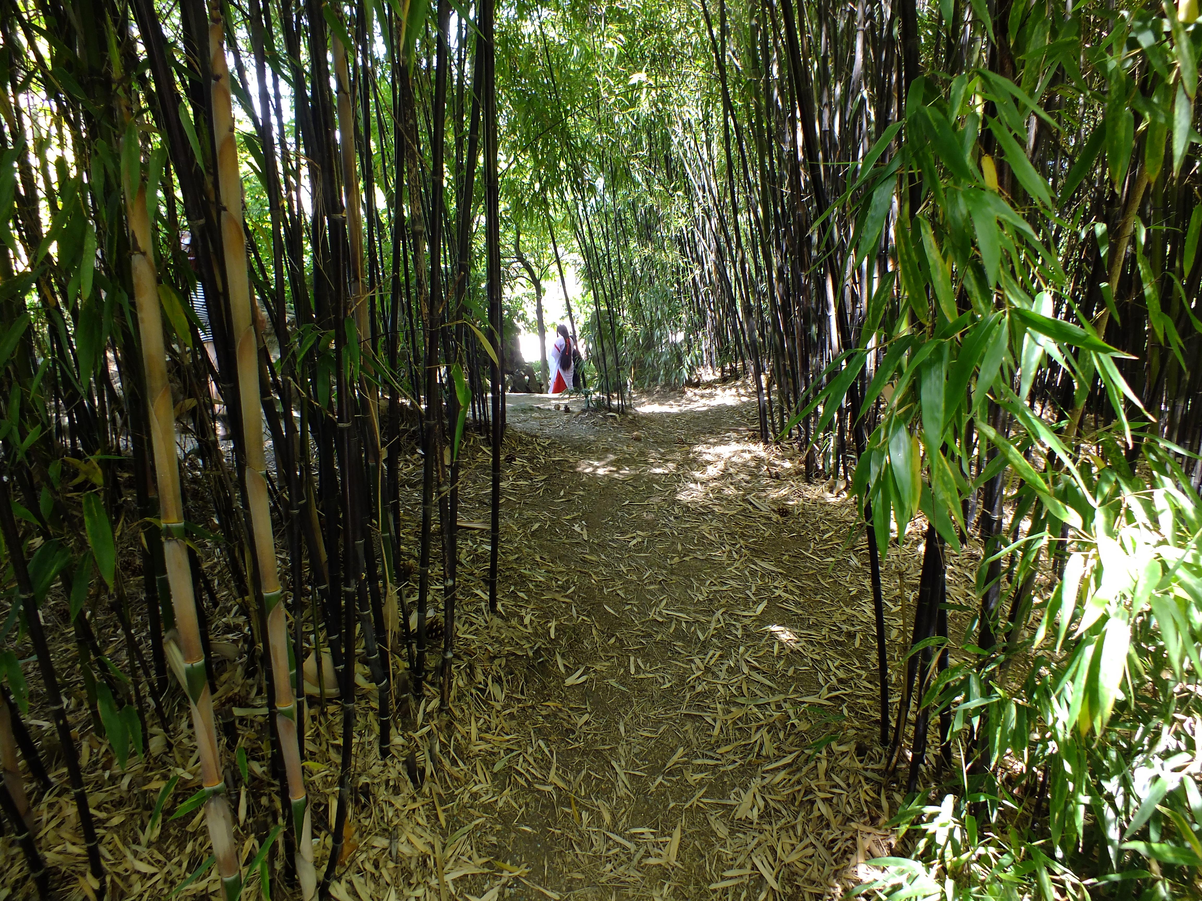 bamboo | U.S. Japanese Gardens
