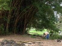 Meet at the bamboo thicket in Lili`uokalani Gardens for work and play Friday and Saturday, July 17 & 18