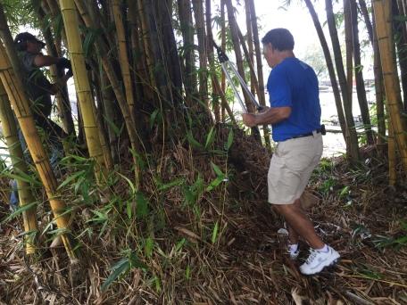 BambooAug5HarveyCraig_1381