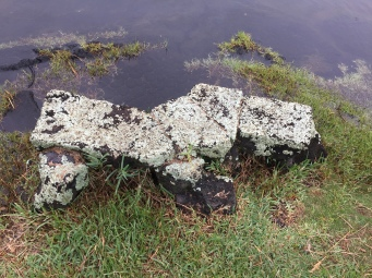 task: clean lichen off rock bench and remove surrounding weeds