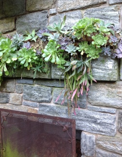 succulents spill over the mantle in the ruin